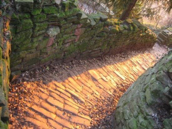 Philosophers' Way (Philosophenweg): The pathway back down to the old bridge, aglow with the last moments of the day's sunlight.