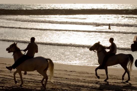 Tel Aviv, Israel: Horses on beach