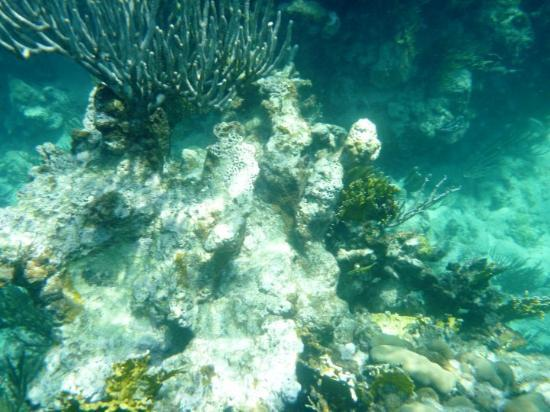 The Coral reef off of Culebra Island in Puerto Rico.  Pics taken with a waterproof panasonic lum