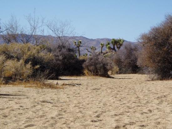 Bilde fra Joshua Tree National Park