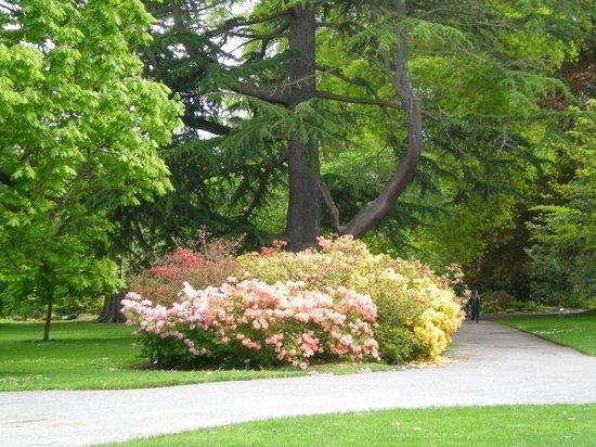 حديقة هاجلي