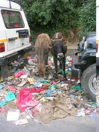 Almora, India: rubbish clean up