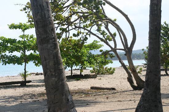 Njoy tours: Palmen en de zee