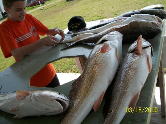 Buras, LA: more reds, 8 lbs and down