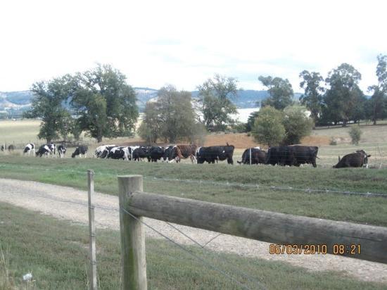 Dandenong, Australia: Yarra Valley Dairy Farm