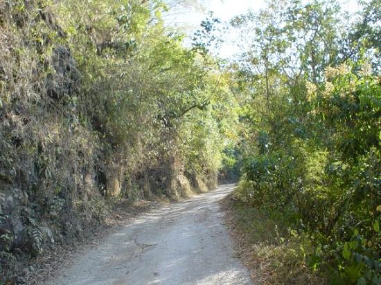 Kingston, Jamaica: altitude 200m