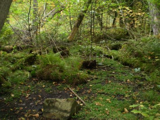 Minneapolis, MN: The mossy woods at Caribou Trail