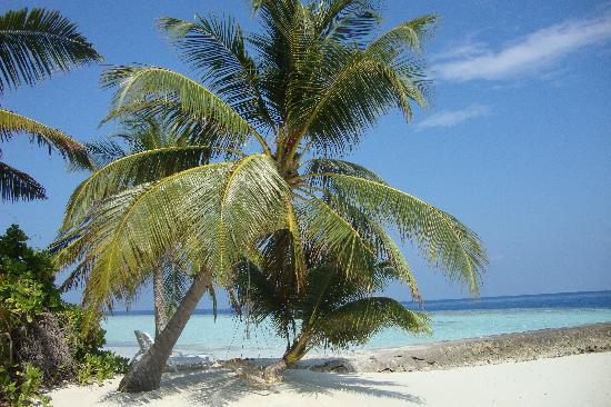 Biyadhoo Island Resort: Typical Maldives