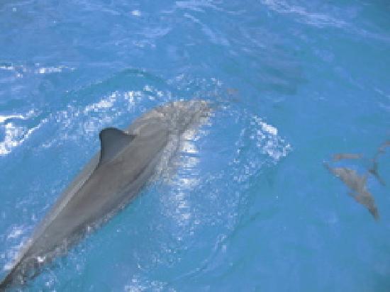 Na Pali Makai: dolphin