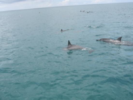 Na Pali Makai: more dolphins!!