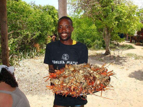 VOI Kiwengwa Resort: capitan Findus con aragoste e cicale-pranzo blue day