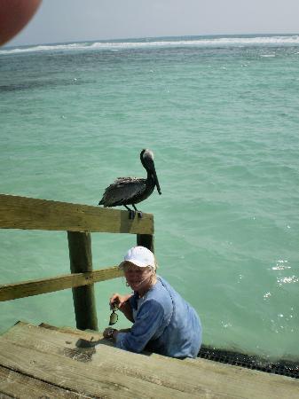 Grand Bahia Principe Coba: visitor on the dock