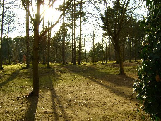 Center Parcs Elveden Forest: View from room