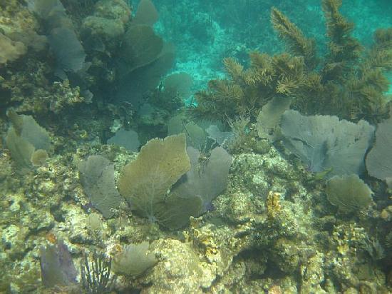 The Original Snorkeling Adventure: Breathtaking reef