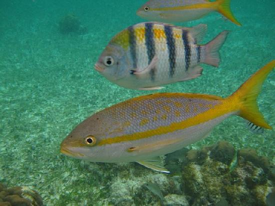 The Original Snorkeling Adventure: Fish!