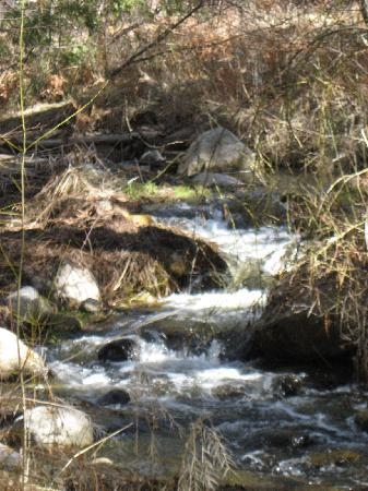 Idyllwild, Kalifornien: Beautiful Creek Alongside The Inn