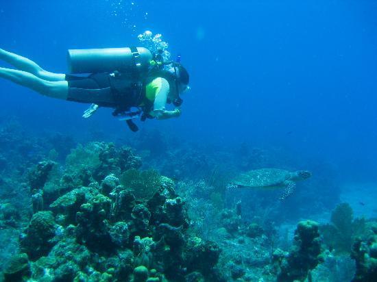 Bananarama Dive & Beach Resort: Lots of turtles!