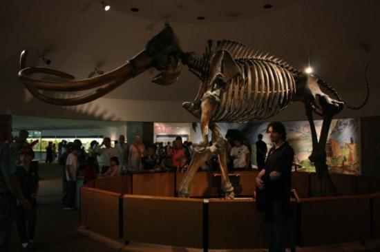La Brea Tar Pits and Museum: Some of the stuff they have found in the tar pits