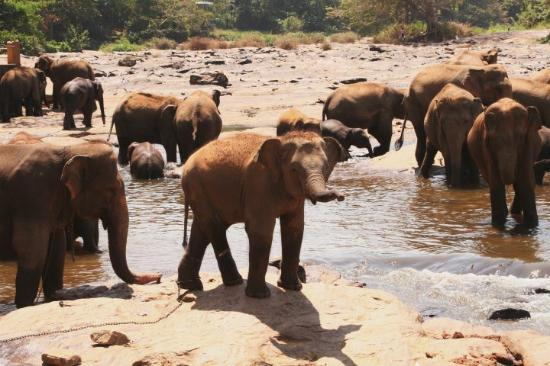 Negombo, Sri Lanka: dito