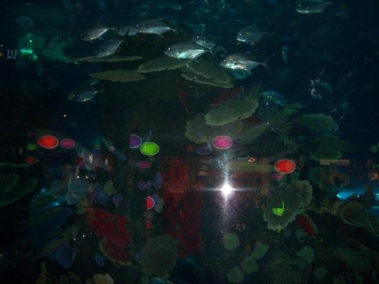 The Dubai Mall: The Aquarium