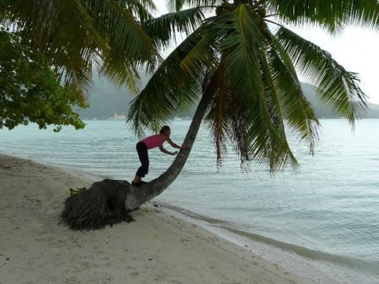 Maupiti Island, Fransk Polynesia: et moi je grimpe aux cocotiers!!