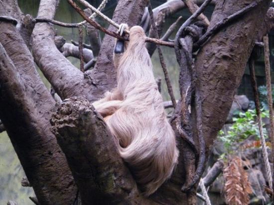 Bilde fra Henry Doorly Zoo