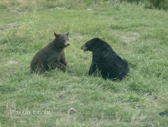 REXBURG IDAHO BEAR WORLD