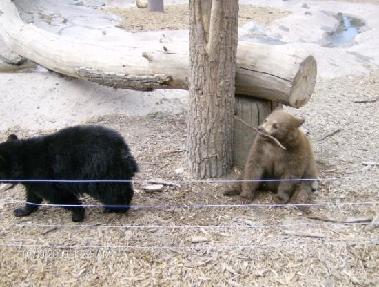 Rexburg, ID: BEAR WORLD BABY CUBS