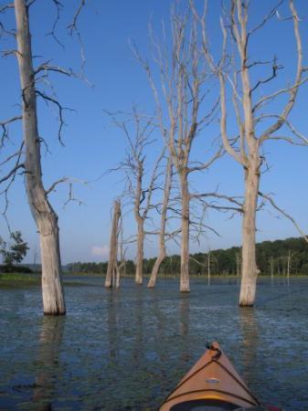 Shohola Lake (above Shohola Dam in Wayne County)