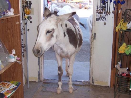 Oatman, AZ: I need a blanket, its getting a little chilly at night.  Do you carry them here, shopkeep?