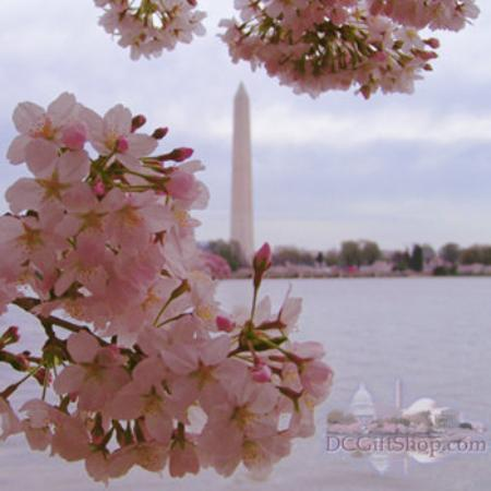 Jefferson Memorial: Cherry Blossoms in DC 2006
