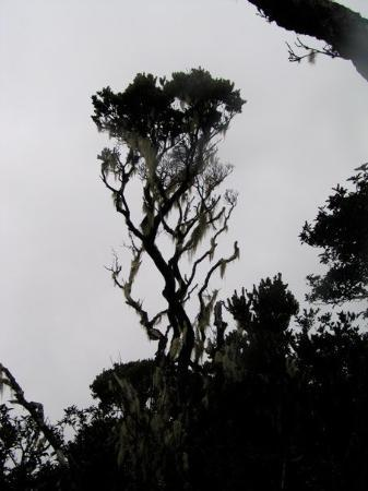 Kota Kinabalu, Malaysia: P1010025