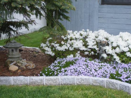 My Bayville garden
