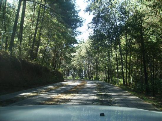 Morelia, Mexico: camino empedrado d las monarcas