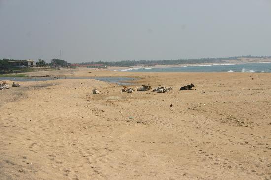 Stardust Beach Hotel: the beach