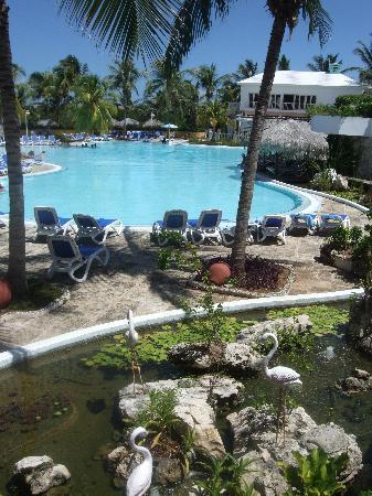 Melia Cayo Coco: Area de piscina