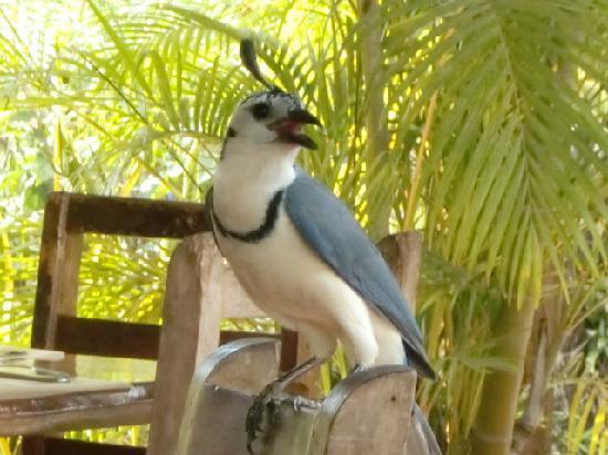 Hotel Bula Bula: Exotic bird visiting the neighbour table
