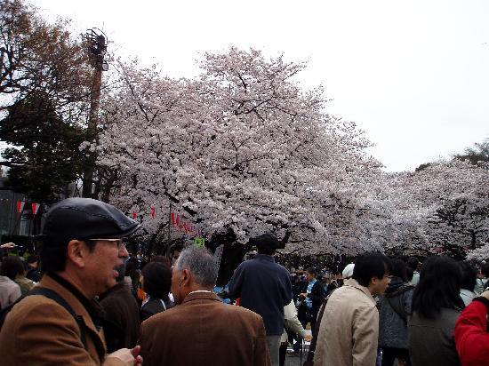 Ueno Park: 美しい。