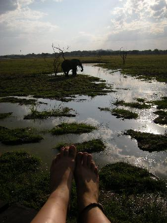 Kafunta River Lodge: Me sitting on the deck watching elephant approaching