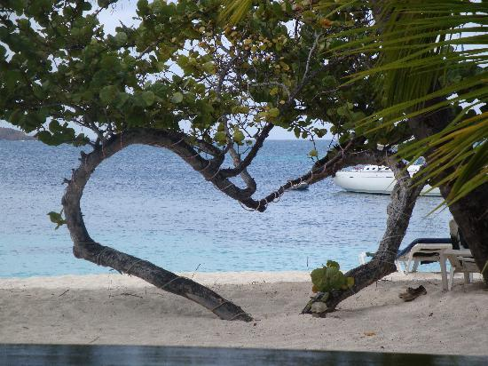 Palm Island Resort & Spa - All Inclusive: Heart shapped tree