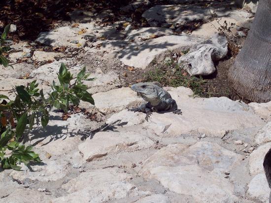 Valentin Imperial Riviera Maya: Wildlife