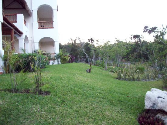 Valentin Imperial Riviera Maya: Look close there is a Lemur