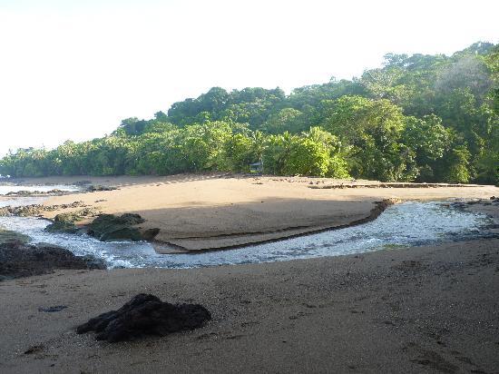 La Paloma Lodge: The beach at Corcovado - stunning!