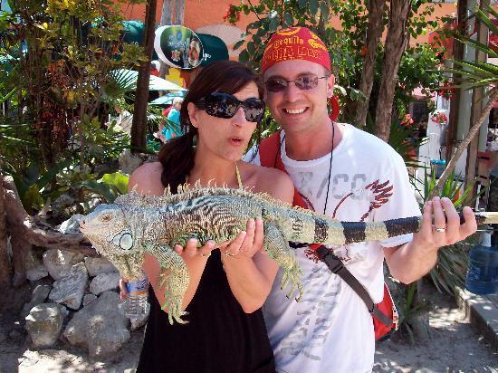 Now Jade Riviera Cancun: Lots of Iguanas everywhere