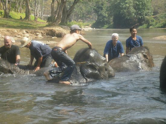 Thai Elephant Home: Playing in the river!