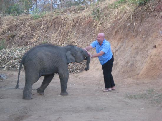 Thai Elephant Home: Hubby and baby elephant tussle!