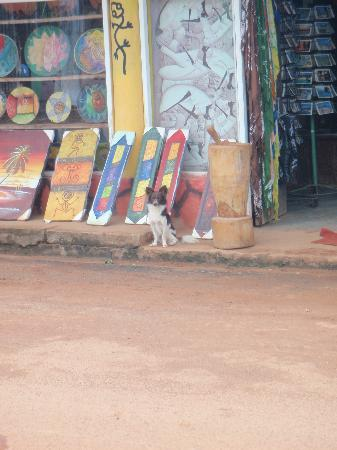 Grand Paradise Samana: shop in town with adorable dog