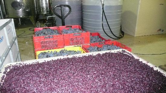 Lynx Wines: Wine Making