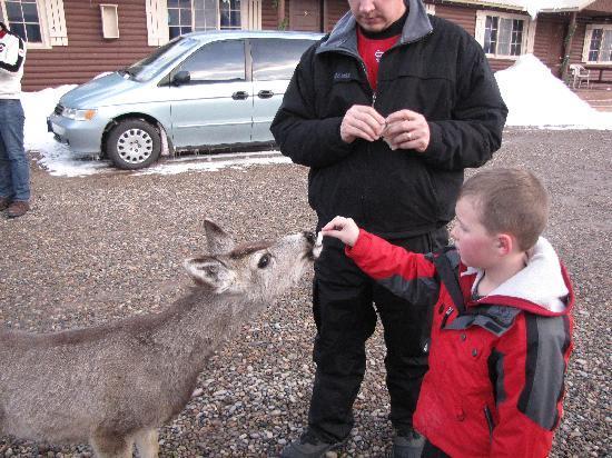 Three Bears Lodge: Feeding the deer.