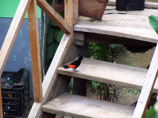 Cabinas Manolo: Lot's of bird around the buildng